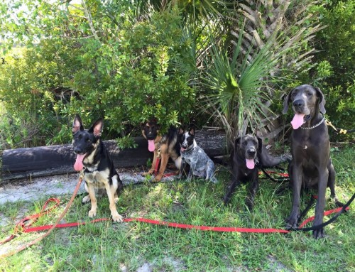 The Best of Orlando Dog Parks