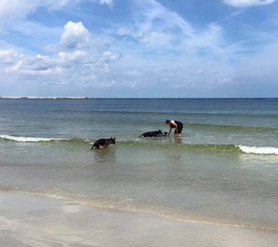 Professional dog trainer Sharon Burch stands in the water with three of her Cadets, teaching them off leash training in a fun, calm atmosphere.