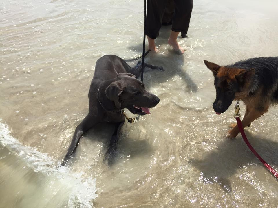 Two of our Cadets having a good time playing in the water on their leashes.