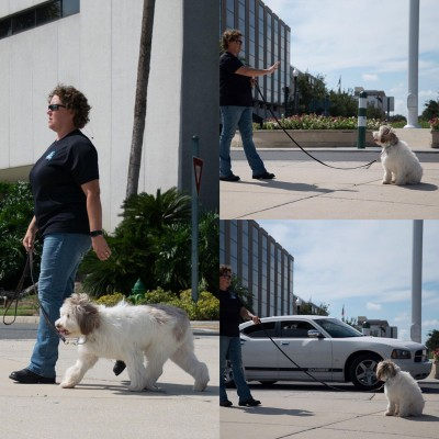 Professional dog trainer Sharon Burch demonstrating on-leash training on a sidewalk with a fluffy white dog.