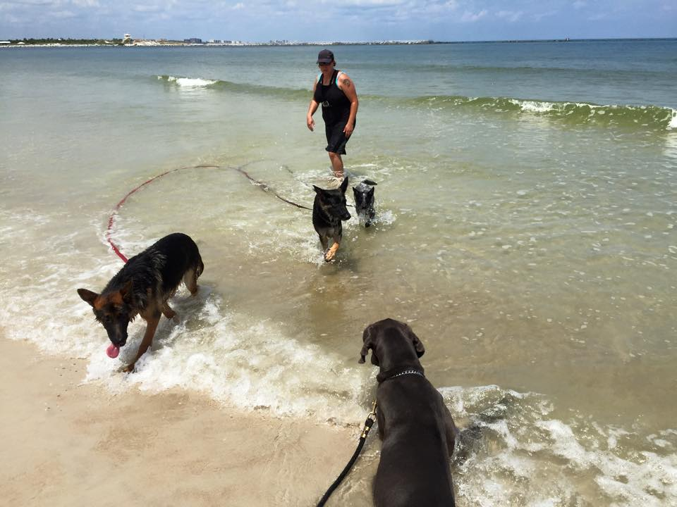 Four dogs stand on the coast by the beach while their professional dog trainer watches closely.