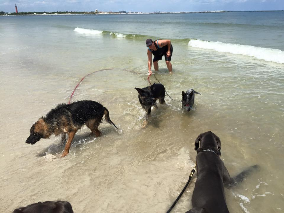 One of our German Shepherd Cadets shakes off some extra water at the beach. The other Cadets rest in the water while Sharon Burch, professional dog trainer, holds their leashes.