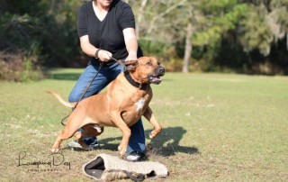 Sharon Burch holding a leashed personal protection canine during a dog training session.