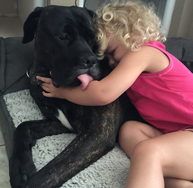 A large black dog giving a kiss to her little human friend.