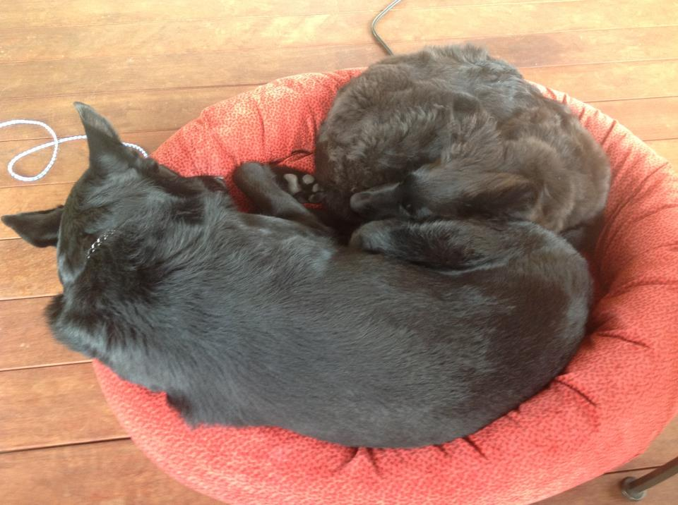 Two black dogs sleep together on a red pillow.