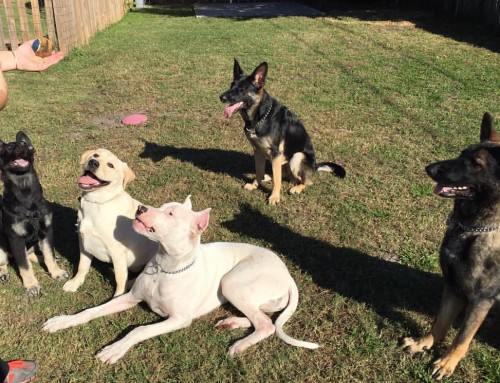 Choosing the Best Dog Trainer and Training Program for Your Dog