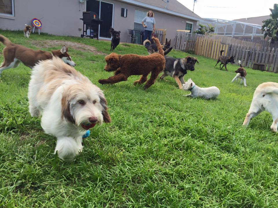A variety of dogs having fun on the green lawn at The 1 Dog Trainer Academy.