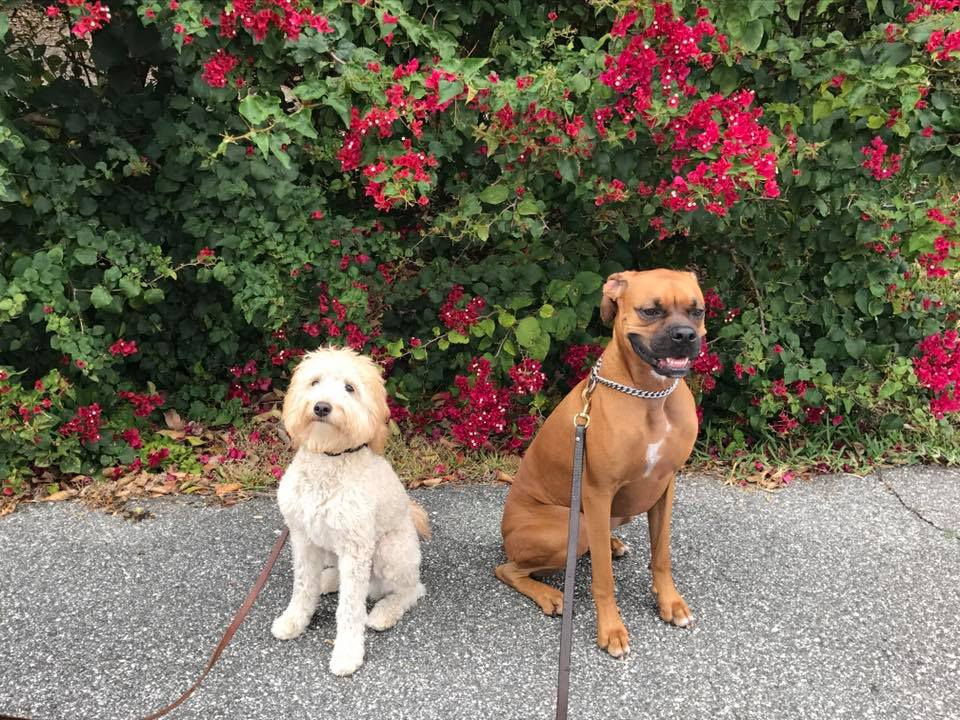 Two happy pups sitting in front of a flower bush.